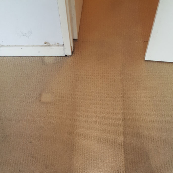 High Traffic Carpet Cleaner Solution Reviews